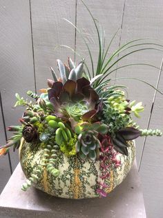 Nice succulent pumpkin by Catherine Scott