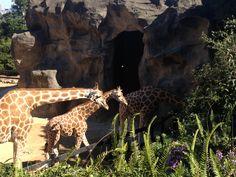 Toronga zoo