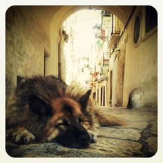 Let sleeping dogs lie....Bari-Italy