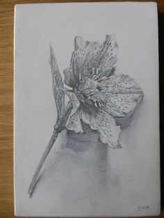 SILVERPOINT Drawing on Pinterest | Drawings, Fine art and Leonardo ...