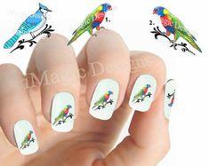 Waterslide Nail Decals Stickers, Bird Nail Art Transfer, Parrot or Blue Jay, Nail Tattoos Bird Nail Art, Animal Nail Art, Bright Nail Polish, Clear Nail Polish, Short Nails, Long Nails, My Nails, Long Fingernails, Water Nails