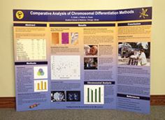 Delightful Scientific Poster Display Ideas | Tri Fold Posters For Scientific U0026  Research Poster Displays
