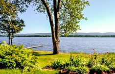 3918 Armitage Avenue - Ottawa River Waterfront Properties & More – Mary Lou Morris Ottawa River, Waterfront Property, Mary, Plants, Plant, Planets