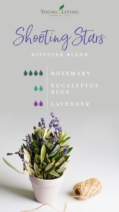 Shooting Stars Diffuser Blend: Clear the air so you can settle with a combo of Rosemary, Eucalyptus Blue, Lavender. Young Essential Oils, Calming Essential Oils, Essential Oils Guide, Essential Oil Diffuser Blends, Lavender Essential Oil Benefits, Doterra, Eucalyptus Essential Oil Uses, Eucalyptus Oil, Essential Oil Combinations