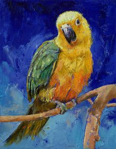 """Jenday Conure"" Canvas Prints by Michael Creese 