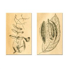 CARA SAVEN | 2-Piece A0 Botanical Canvases - Homeware - 5rooms.com Canvases, Brand Identity, Design Inspiration, Illustrations, Wall Art, Spring, Artist, Image, Beautiful