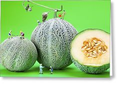 Planting Cantaloupe Melons Little People On Food Greeting Card by Paul Ge