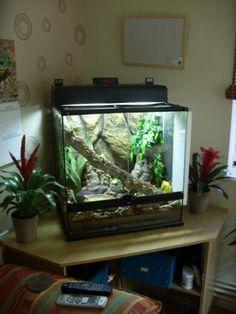 White tree frog terrarium? - Reptile Forums