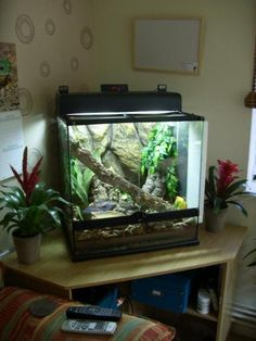 White tree frog terrarium? - Reptile Forums