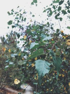 Photo by thatgirlfrombrave   VSCO   Uckfield