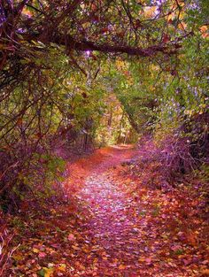 enchanted-fairytale-dreams:  forest path | via Facebook on We Heart It. http://weheartit.com/entry/70832936/via/smells_like_dust
