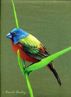 How to Draw Birds with Colored Pencils | workshop - NorthLightShop.com