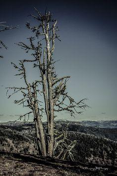 Wind Dead - null