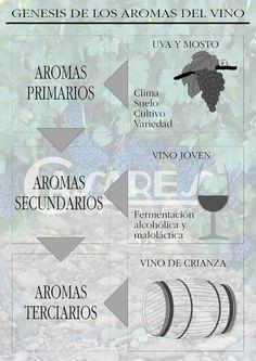 Genesis de los aromas del vino