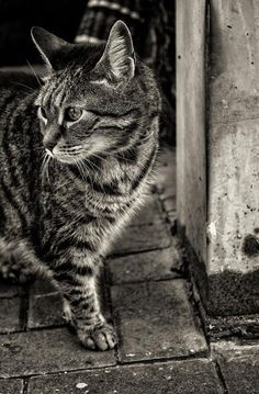 500px / Photo The cat that walked by herself by Alex Greenshpun
