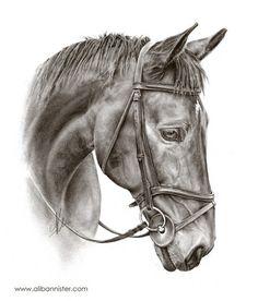 Oscar - horse drawing by ali bannister art - horses konie, rysowanie, szkic Horse Head Drawing, Horse Pencil Drawing, Horse Drawings, Realistic Drawings, Animal Drawings, Art Drawings, Arte Equina, Stippling Art, Horse Sketch