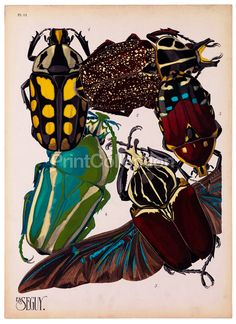 I love this beetle print!