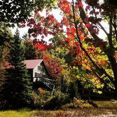 So it's official. Fall has arrived on the sunny shores! One season closer to #tamakwa2016  #tamakwafall #algonquinpark #fallcolours #tamakwa2015 #tamakwatuesday