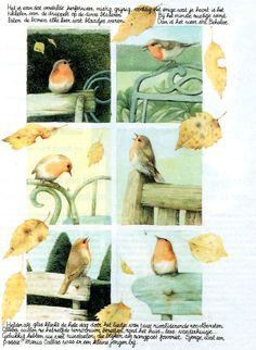 M.Bastin, my collection, nature
