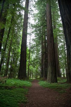 Humbolt Redwoods State Park - California  This is a must see.