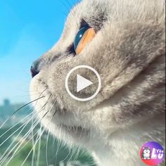 Pawsworld is the portal to your little cute friends world. Cute Baby Animals, Funny Animals, Cute Cats, Funny Cats, Dog Shaking, Relaxing Gif, Attractive Eyes, Cute Friends, Cat Sitting