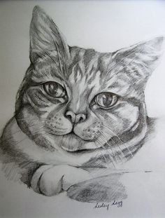 Pencil drawing of  Jasper