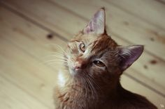 Hey, i'm kerstin – the web knows me as invisibly – lovely to meet you here! I'm a graphic designer. Peter Pan, Kitten, Play, Cats, Animals, Cute Kittens, Kitty, Gatos, Animales