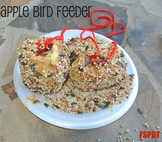Apple bird feeder**tie some yarn to a screw, push the screw into the top of a peeled apple, cover with peanut butter and roll in birdseed.