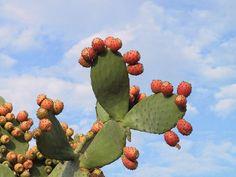 Plagas y enfermedades de los cactus: cuidado con su salud