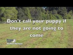 How to train a puppy to come when called by Doggy Dan the Online Dog Trainer Puppy Cake, Dog Items, Cat Names, Dog Behavior, Dog Training Tips, New Puppy, Saving Tips, Funny Photos, Dogs And Puppies