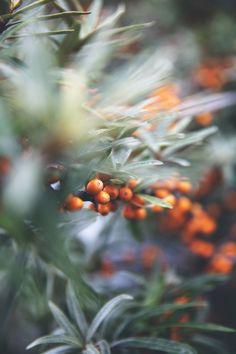 Havtorn & morotsjuice