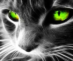 PICTURES OF THE COOLEST CAT PICTURES | Cool Cat - Mobile Wallpapers | Mobile Software | Mobile Themes | Free ...