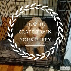 Crate training is the most helpful way to potty train your puppy and get them on a normal sleeping schedule. They are most likely used to going whenever and wherever they want! It can be quite the…