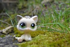 Kitten #1074 brown sugar
