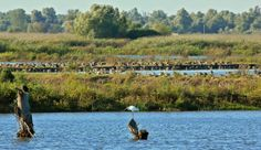 Das Donaudelta Mountains, Nature, Travel, Europe, World, Naturaleza, Viajes, Destinations, Traveling