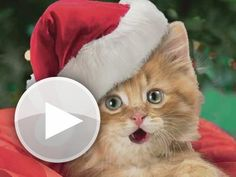 Merry Christmas to all my Pinterest followers!!!  Hey, checkout this animated gift card!