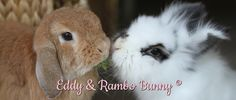 Eddy and Rambo Bunny. Missed do very much. Pure sweetness