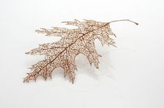 Sculptor and installation artist Jenine Shereos creates these delicate, near weightless tree leaves by tying together individual strands of human hair. Sculpture Textile, Leaf Skeleton, Artistic Installation, Colossal Art, Tree Leaves, Tree Tree, Leaf Art, Textiles, Textile Artists