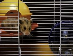 69 Best Hamster Stuff images in 2018 | Pet cage, Cage, Pets