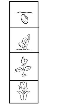 Frog Coloring Pages, Preschool Coloring Pages, Art Classroom Decor, Classroom Labels, Parts Of A Flower, Parts Of A Plant, Kindergarten Science, Science Classroom, Frog Crafts Preschool