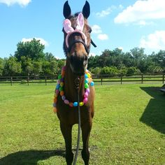 #horse #Florida #floridahorse #tb #thoroughbred #mare #horsesofinstagram #horses #Easter #horsenation #bunnyears #eastereggs #xoxo #neigh My 17h child got to enjoy my craft making skills in the form of a easter egg necklace. So of course I had to include a new set of pink bunny ears.
