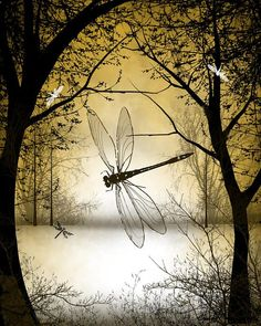 Great digital illustration of dragonflies in a woodland scene.