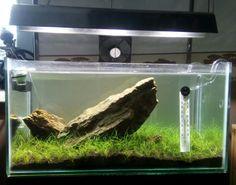Pokus o iwagumi #iwagumi#layout#aquascape#aquascaping