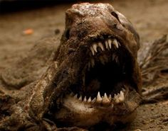 The 25 Most Terrifying Animals in Existence - BlazePress