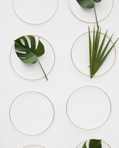 Green Plants: Rings and leaves are the perfect combination to create the most elegant and simple backdrop Green Leaves, Plant Leaves, Cactus, Green Plants, Green Garden, Wedding Blog, Wedding Photos, Planting Flowers, Backdrops
