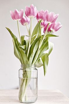 pretty spring flowers. I don't have a favorite flower but I've always liked tulips since I was a young child because it was a sign of spring <3