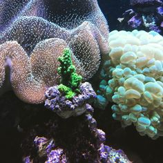 Spannende Unterwasserwelt im Aquarium für groß und klein! #aquarium #koralle #fische