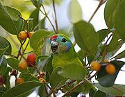 #bird #sustainability #ecotourism #Queensland #Australia Queensland Australia, Parrot, Sustainability, Centre, Cruise, Wildlife, Birds, River, Parrot Bird