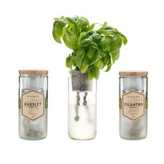 modern jar hydroponic planter - Google Search Indoor Vegetable Gardening, Container Gardening, Gardening Tips, Organic Gardening, Gardening Services, Urban Gardening, Hydroponic Farming, Hydroponic Growing, Diy Hydroponics
