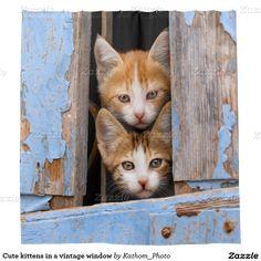 Cute kittens in a vintage window